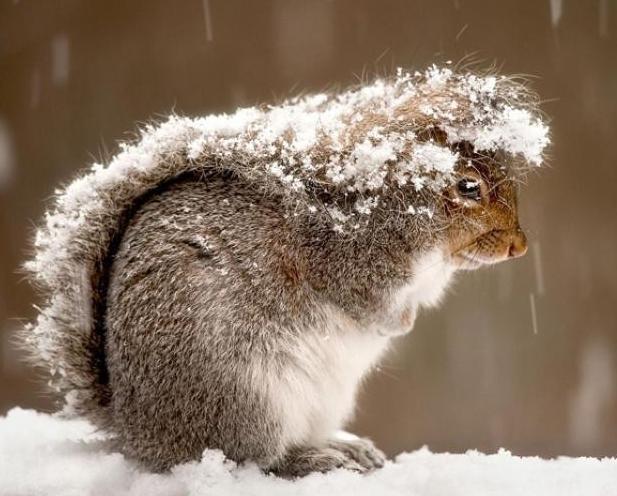 松鼠吃什么食物好
